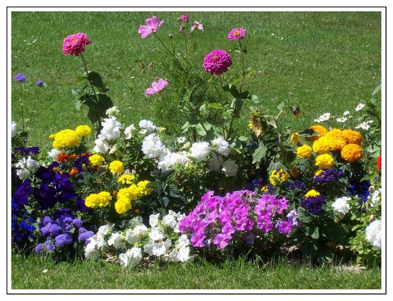 C mo saber qu tipos de flores tengo en mi jard n for Como organizar mi jardin