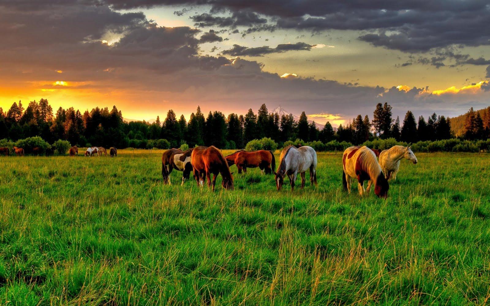 Caballos en el campo - Horses field