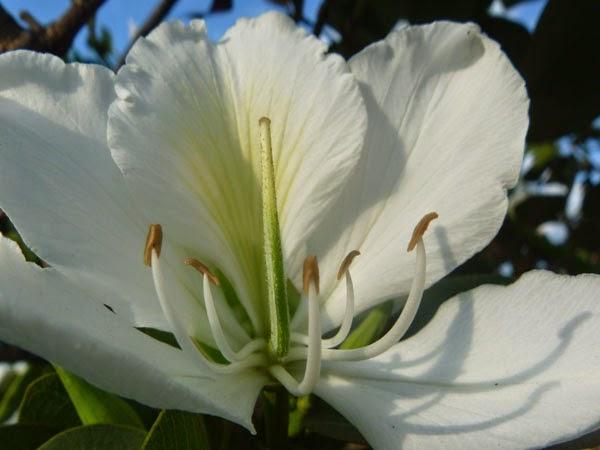 http://3.bp.blogspot.com/-ZQqE7KykiqA/U8qK8zo9jAI/AAAAAAAABM8/S1t5KrLCIVU/s1600/flor+branca.jpg