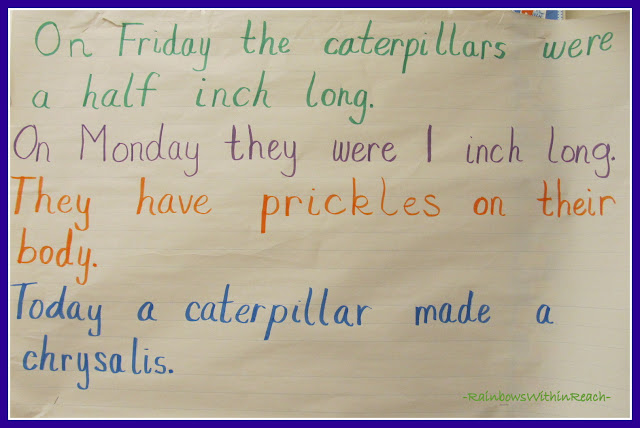 photo of: Anchor Chart with Caterpillar Observations (via RainbowsWithinReach)
