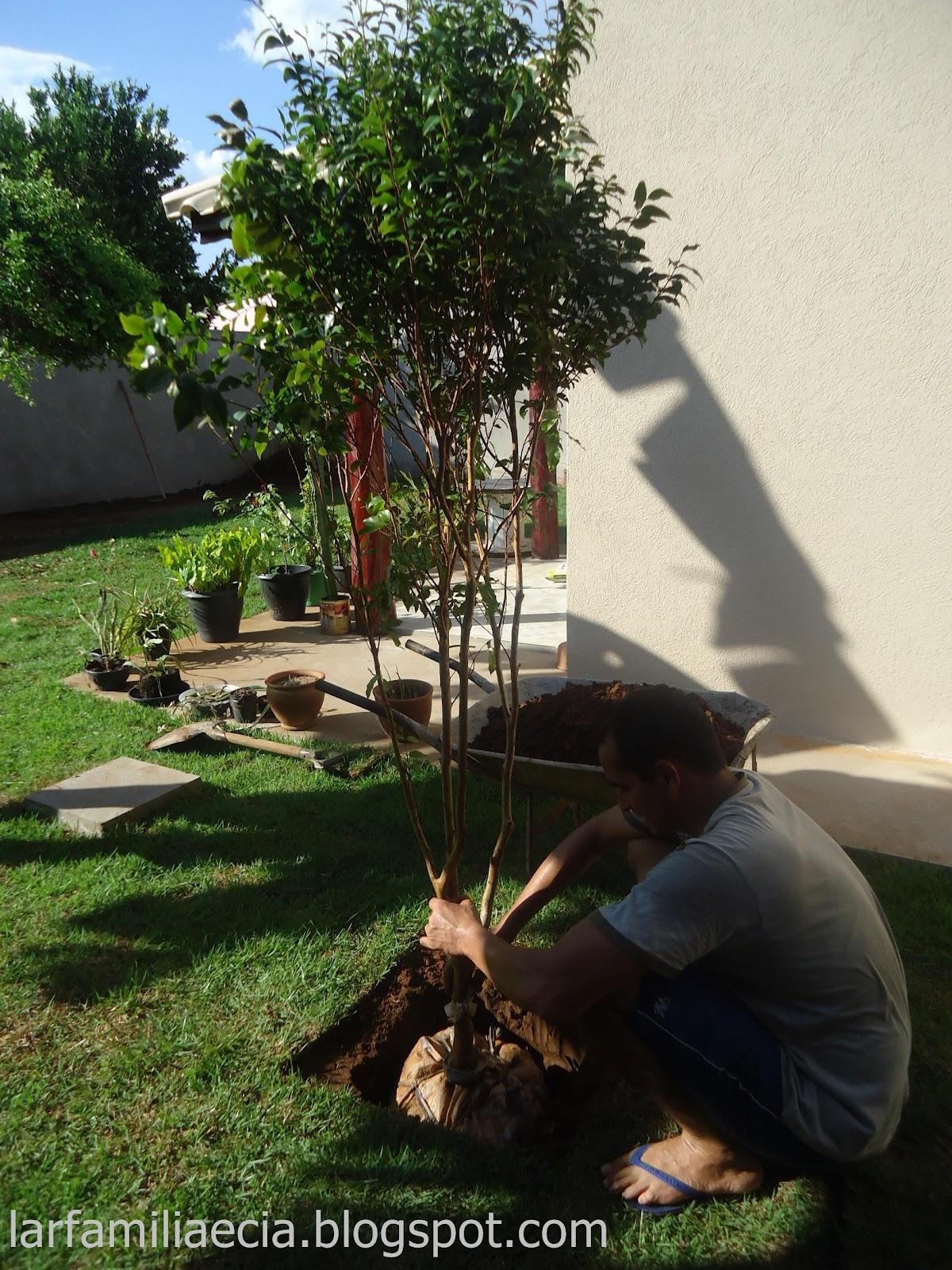 ipe de jardim familia: jardim está ficando lindo! Plantamos também uma palmeira imperial