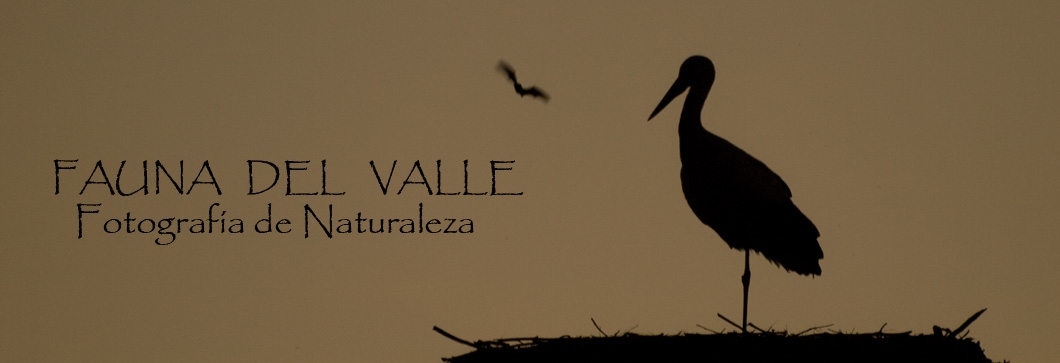 Fauna del Valle - Fotografa de Naturaleza