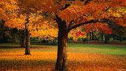Hermosos arboles en la época de otoño. Wallpaper de varios arboles en un . hermosos arboles en la epoca de otoã±o