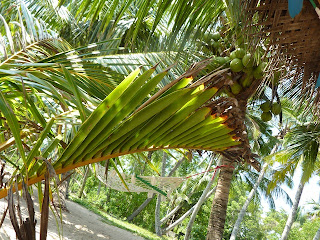 Boissons au Sri Lanka