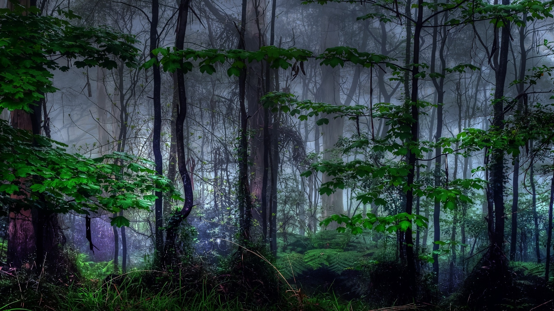 Nature trees dark forest mist - High Definition Wallpapers ...
