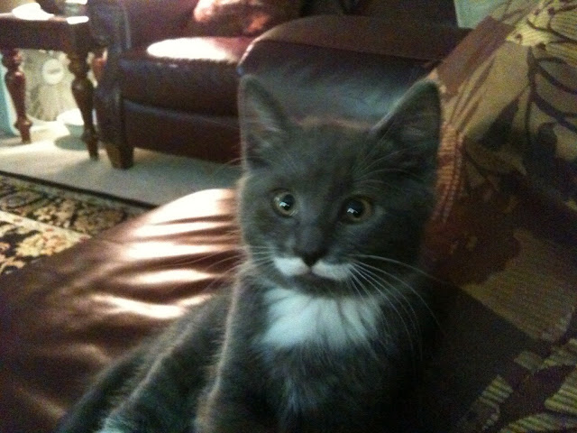 cat with mustache picture, funny cat photos