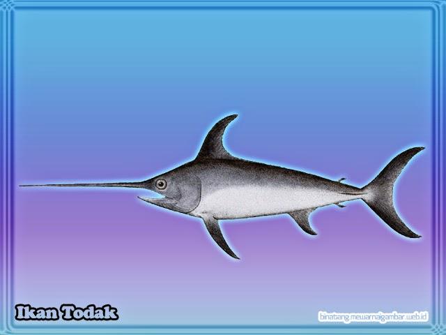 gambar ikan todak