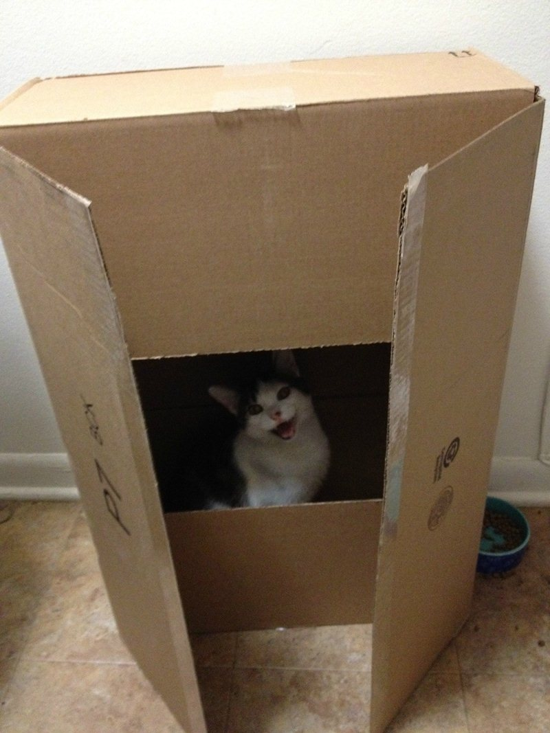 Funny cat pictures part 14, cat in box