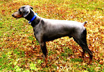 Rating My New ToughHound All Sports Personalized Collar - 5 *****