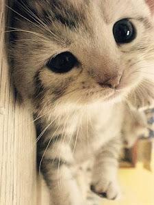 Gattino!!!