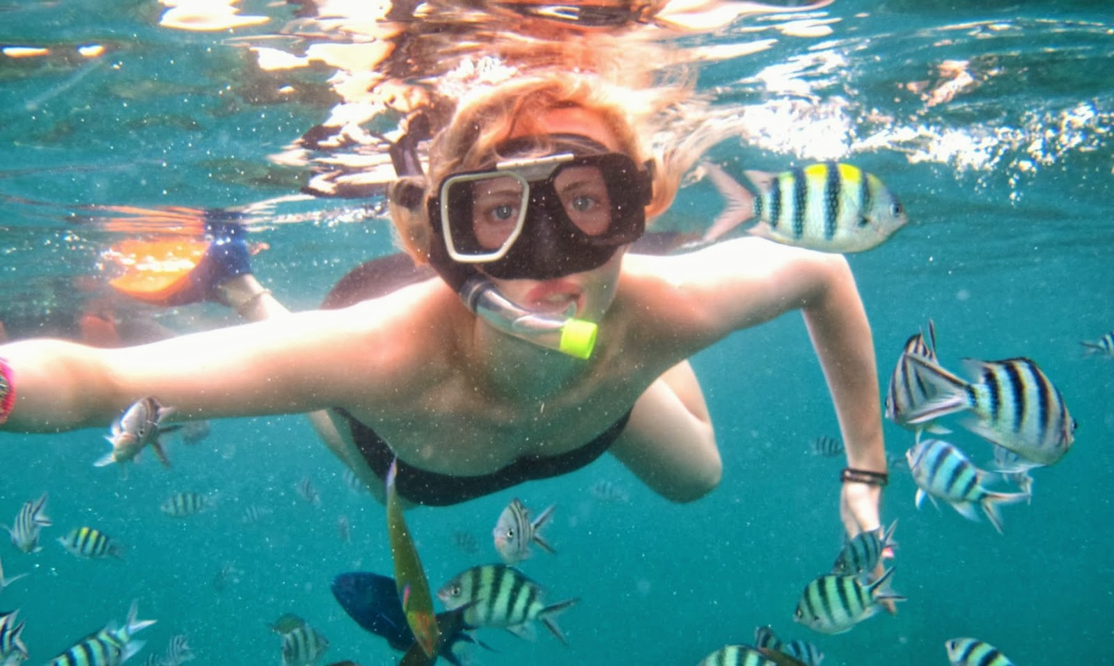Pulau Perhentian Island Coral Feef and Fish Swimming