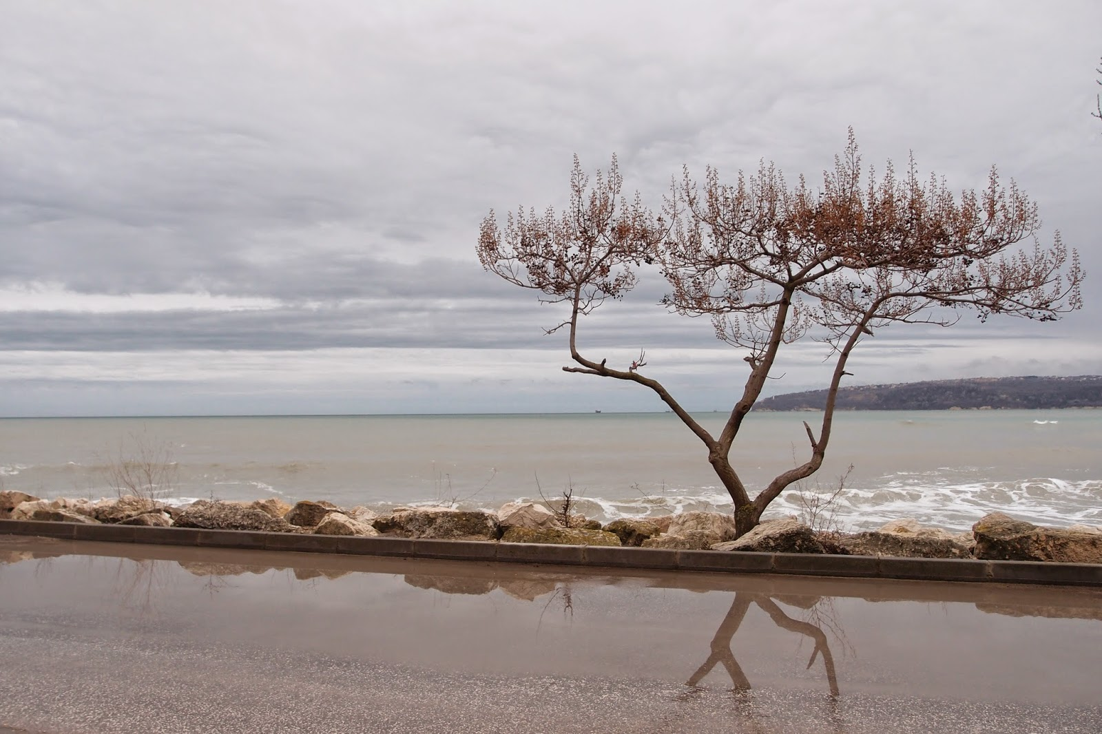 My favorite tree by the sea