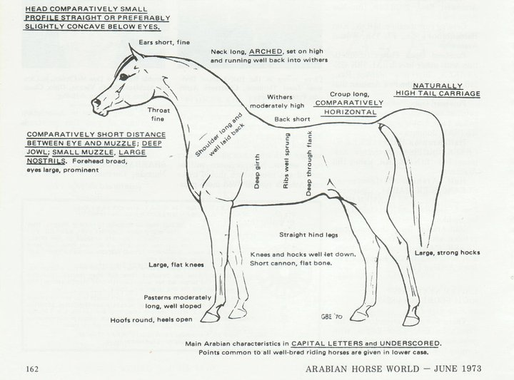 Diagram Of An Arabian Horse - Library Of Wiring Diagram •