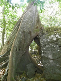 Devrai trees