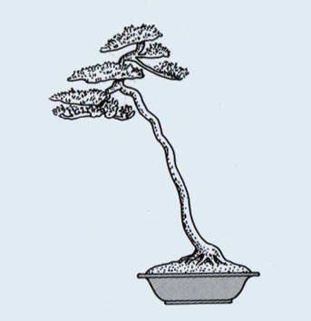 http://evoluzionebonsai.blogspot.it/2015/02/stili-bonsai-bunjin-litterati.html