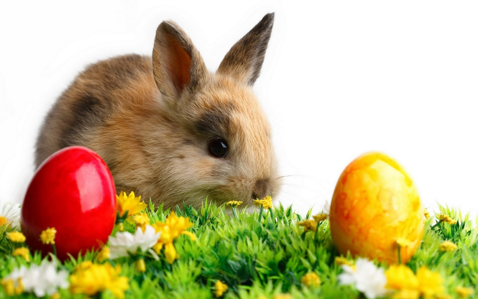 happy easter bunny background viewing gallery