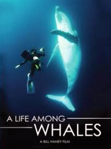 A Life Among Whales - A film for this Whale Watching Season