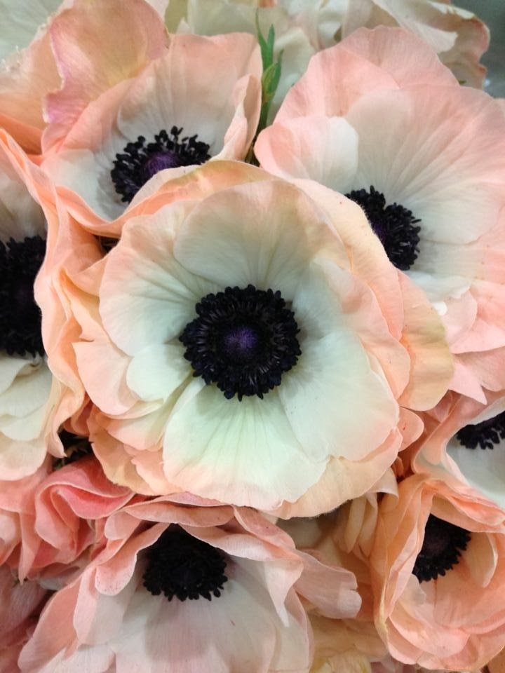 weddings at powerscourt house spring flowers. Black Bedroom Furniture Sets. Home Design Ideas