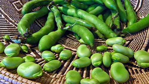 Fava Beans Pods and Favas in Basket