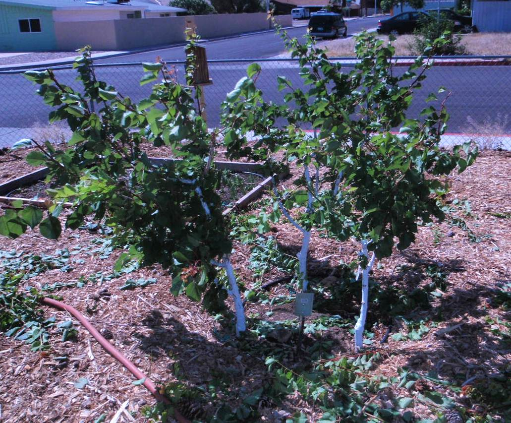 xtremehorticulture of the desert saving space in a small backyard