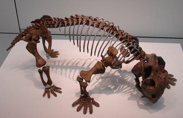 Lystrosaurus