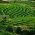Pengertian Ekstensifikasi, Diversifikasi dan Intensifikasi Serta Cara Meningkatkan Produksi Pertanian.