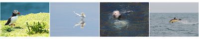 Pembrokeshire Wildlife, Puffin, Egret, Seal, Dolphin