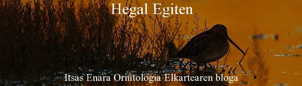 Itsas Enara Ornitologia Elkartea