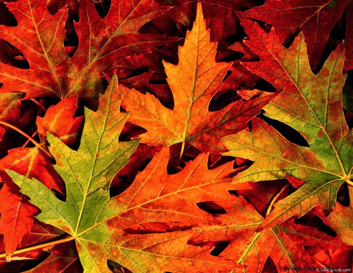 Fall Leaves Background Tumblr  Amazing Wallpapers