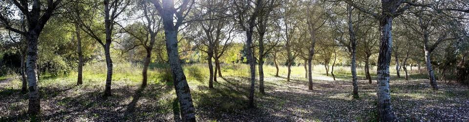 Los árboles invisibles