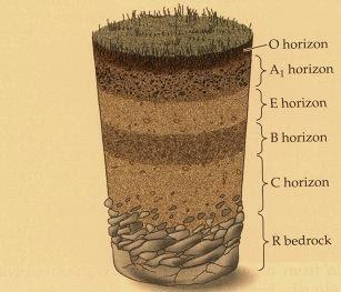 Pengertian Tanah dan Horizon Tanah