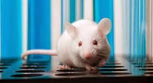 CRISPR/Cas9 Mice Model Service