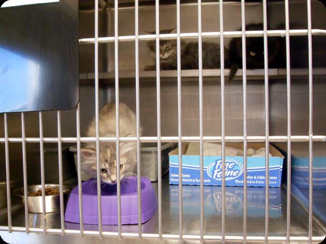cat kitten kitty fluffy cute