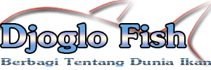Djoglo Fish