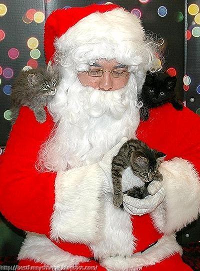 Santa and kittens.