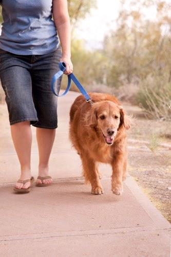 Dog Walking Mesa Az