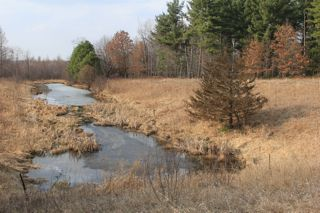 photo of pond, early Spring