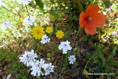 Primavera Sierra de Hornachuelos