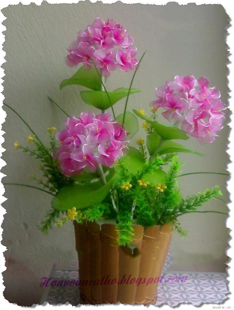 Hinh Hoa Voan