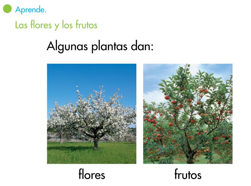 http://www.primerodecarlos.com/SEGUNDO_PRIMARIA/enero/tema1/actividades/CONO/aprende_flores_frutos/visor.swf