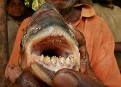 恐怖切蛋魚