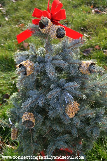 winter outdoor tree decorating for the birds - Outdoor Christmas Tree Decorations For Birds