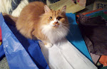 My Cat Tutu ♥