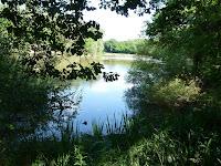 ランブイエの森 クープ・ゴルジュの池