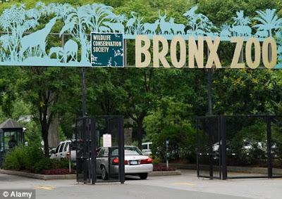 Bronx+Zoo+pic