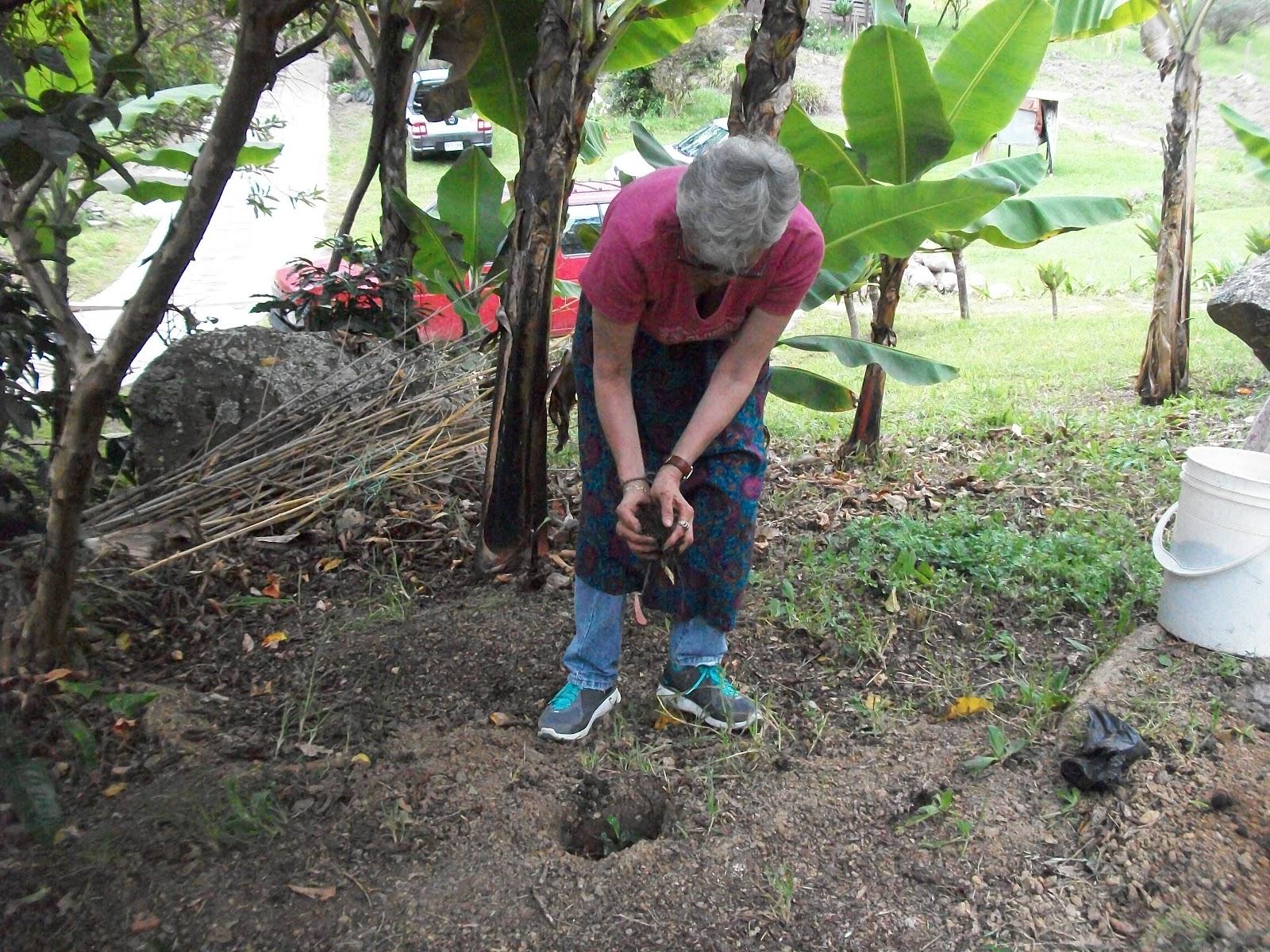 Backtoeden sembrar con el pulso de la tierra - Preparacion de la tierra para sembrar ...