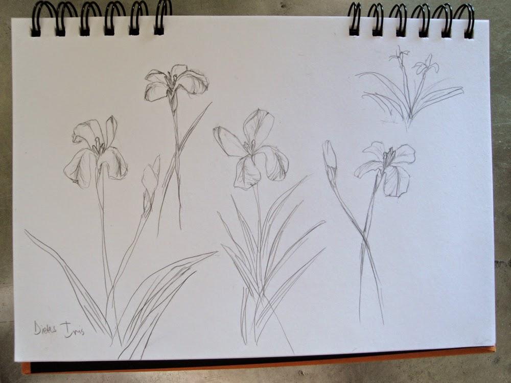 glass powder bullseye sgraffito fused frit painting flower iris white dietes drawing art flutterbybutterfly flutterbyfoto day 17