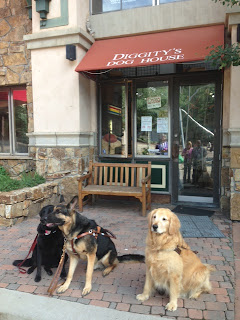 Guide dogs waiting for their next adventure in front of Diggity's Doggs restaurant