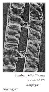 Protista Mirip Tumbuhan - Ganggang