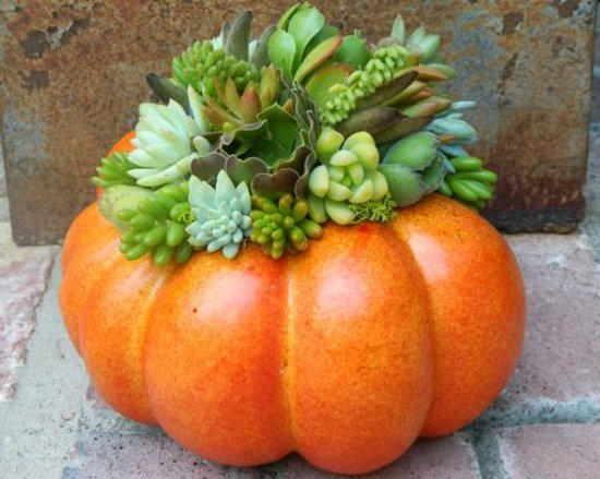 Fall Succulent Centerpiece